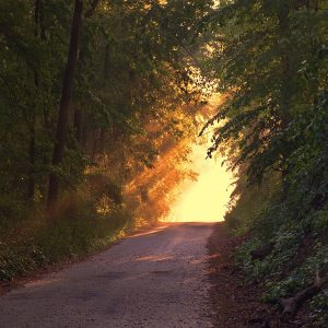 Fran road