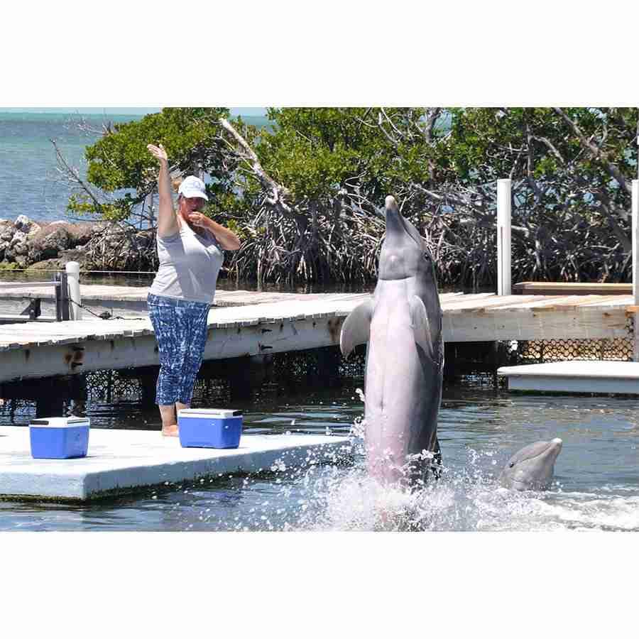 Dolphin16